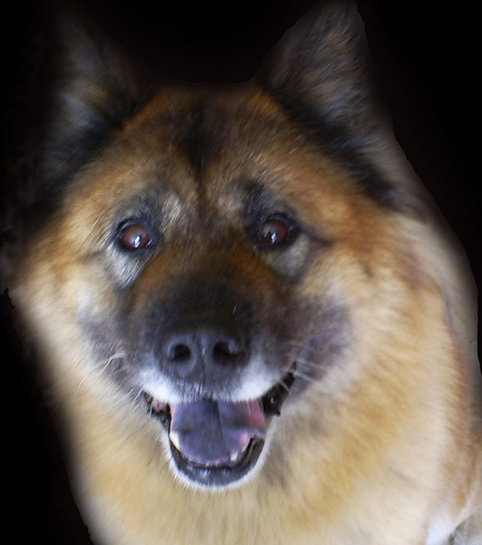 chow chow wolf mix Quotes